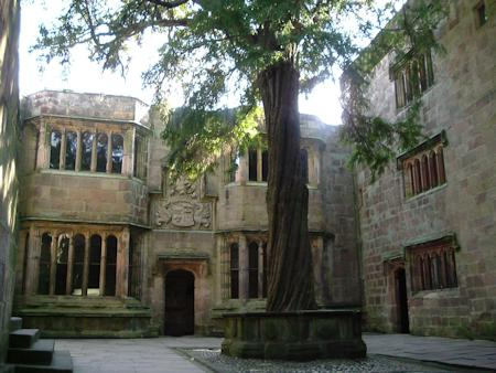 Conduit Court and the ancient Yew tree